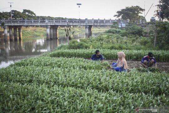Pemkot Jakarta Timur buat kawasan KBT jadi Kampung Buah