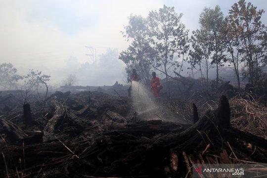 Kebakaran hutan di Dumai, Riau