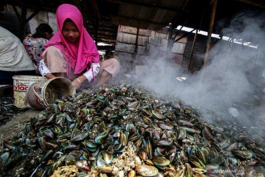 Kerang hijau Teluk Jakarta tak layak konsumsi