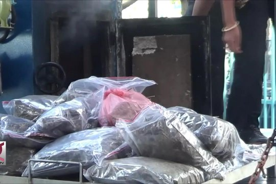 BNNP Bali musnahkan ganja seberat 21.225 kilo gram