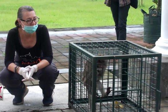 Puluhan Mantan Pemain Topeng Monyet Direhabilitasi