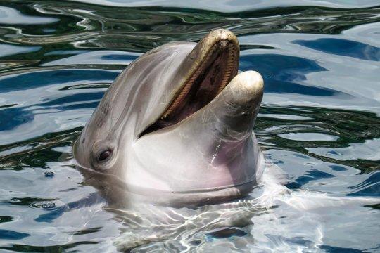 Polisi tangkap nelayan perjualbelikan 9 lumba-lumba secara ilegal