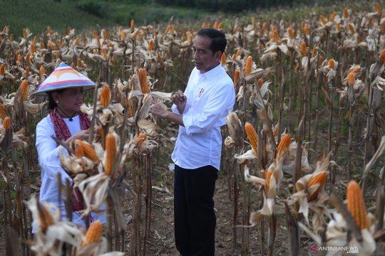 Soal pendampingan 2 juta petani, Presiden: Saya yakin Kadin mampu