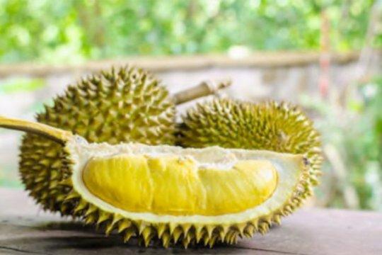 Bisakah kena alergi karena makan durian?