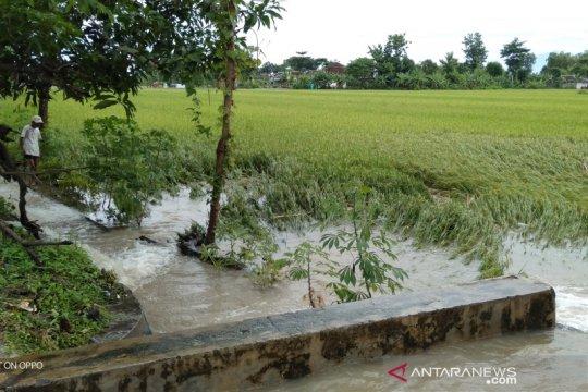 328 hektare sawah di Cawas kebanjiran