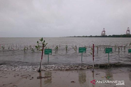Masyarakat tanami pesisir Pandeglang dengan bakau