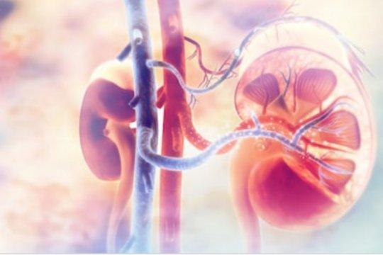 Benarkah ginjal bisa rusak karena hipertensi?