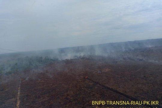 Greenpeace ungkap kebakaran lahan di konsesi perusahaan sawit Riau