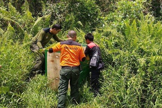 Beruang masuk ke pemukiman gegerkan warga Kalimantan Tengah