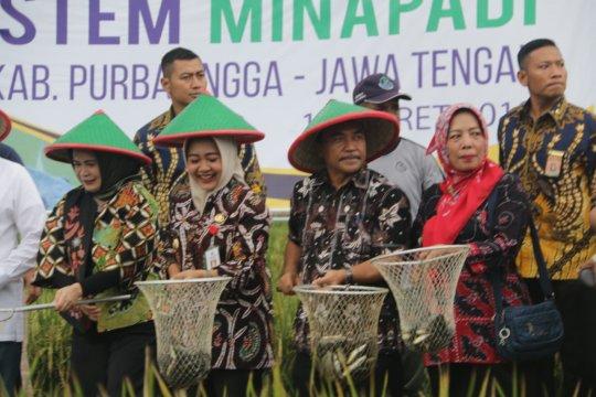 KKP: Program minapadi Indonesia sudah dipelajari 13 negara