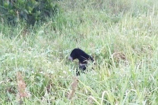 Beruang diburu karena masuk pemukiman warga Sampit
