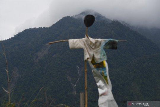 Kementerian LHK: Pemulihan lahan kritis di Indonesia butuh 60 tahun