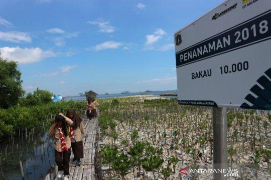 Kerusakan mangrove rapuhkan pertahanan pesisir dari perubahan iklim