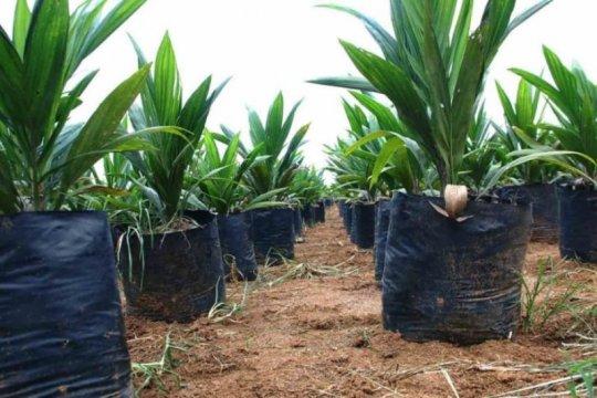 2.830 hektare kebun kelapa sawit di Agam akan diremajakan