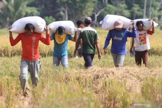 BPS: Angkatan kerja di Jambi turun 61,09 ribu orang