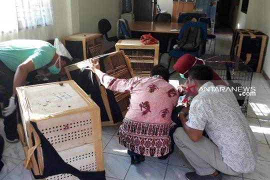 BBKSDA Riau : puluhan satwa dilindungi stres akibat penyelundupan