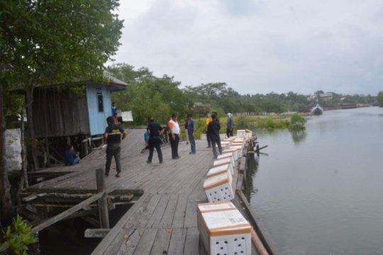 KKP gagalkan penyelundupan kepiting bertelur di Medan dan Balikpapan