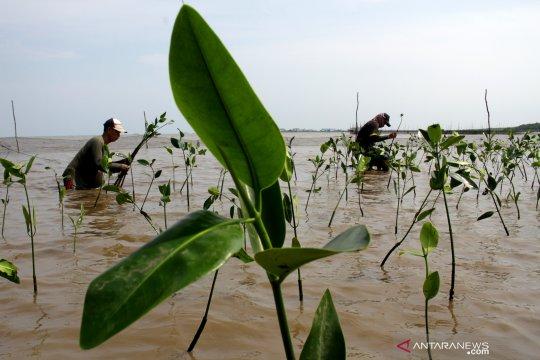 1000 pohon mangrove ditanam istri TNI-AL di Makassar