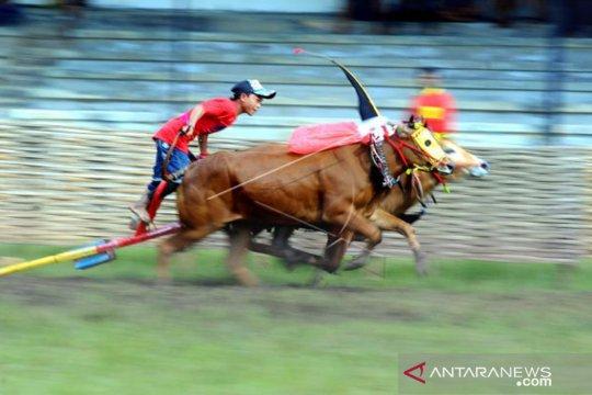 Polda Jatim kampanyekan pemilu damai melalui karapan sapi