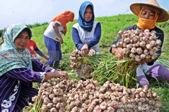 Tolak izin impor bawang putih, pemerintah dapat apresiasi petani