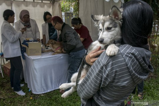Pet Healthy Day