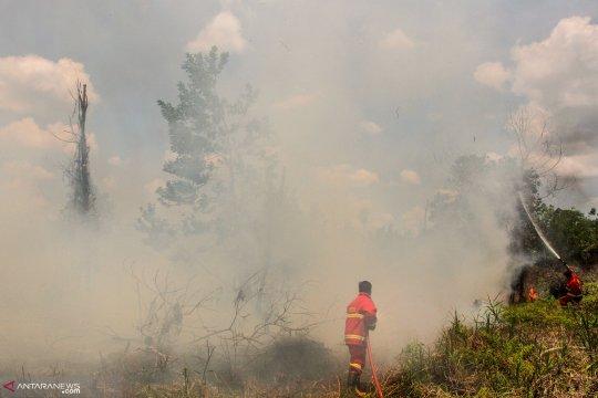 Asap tipis kebakaran lahan mulai cemari udara Pekanbaru