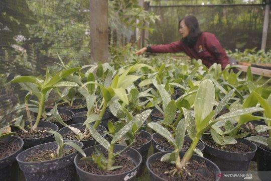 Agrowisata rintisan budidaya anggrek