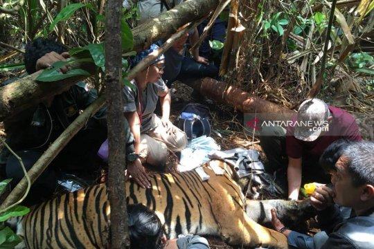 BBKSDA Riau gelar operasi gabungan bersihkan jerat harimau