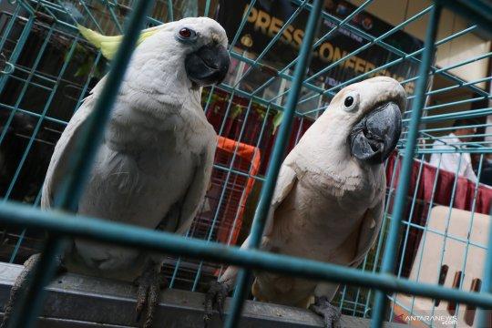 Polres Indragiri Hilir sita 141 burung kakatua ilegal