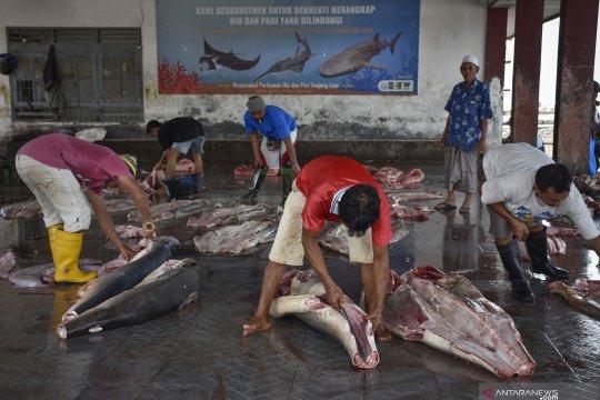 Daging ikan hiu