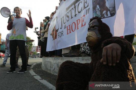 Penyebab kian menyusutnya populasi orang utan di Aceh, menurut BKSDA