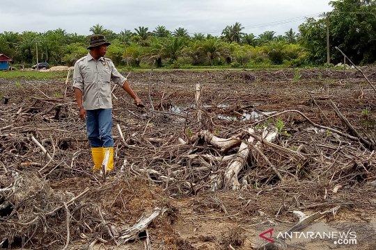 Sebagian hutan mangrove Agam beralih fungsi menjadi tambak