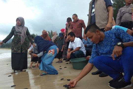 Siswa Aceh lepasliarkan 100 tukik