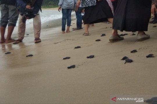 Generasi milenial Aceh diajak menjaga ekosistem laut