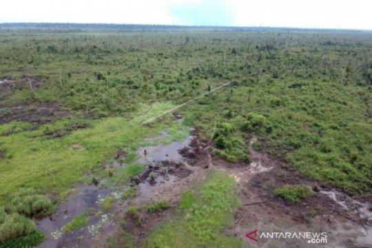 200 ribu pohon khas gambut ditanam di Tahura Orang Kayo Hitam