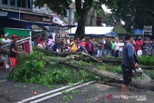 Angin kencang landa Kota Jambi, pohon besar tumbang