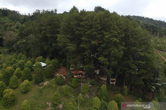 Hamparan pohon pinus jadi daya tarik wisata Dulamayo Gorontalo