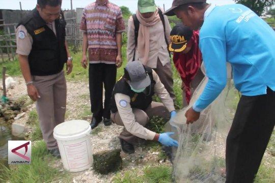 BKIPM Semarang rutin pantau sebaran penyakit ikan