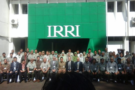"Balitbangtan-IRRI kembangkan beras untuk atasi ""stunting"""