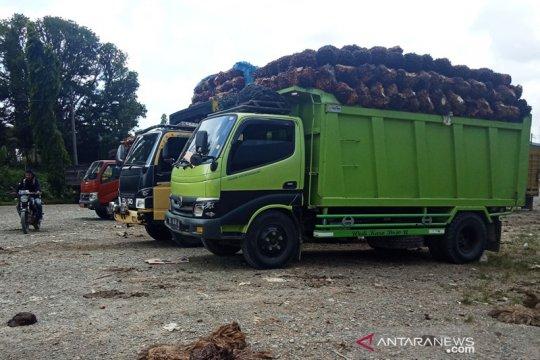 Tekan biaya, pemerintah diminta bedakan sawit industri dan makanan