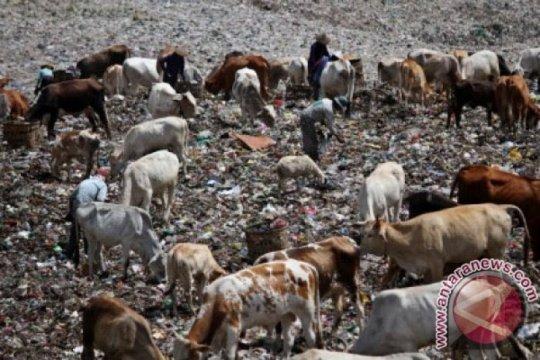 Urai persoalan sampah, talut TPTS Piyungan-Yogykarta akan ditinggikan