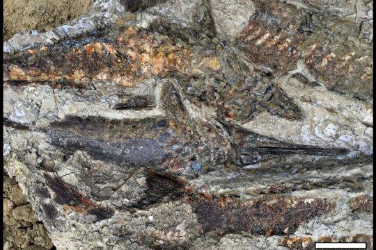 Ilmuwan temukan bukti baru asteroid yang musnahkan dinosaurus