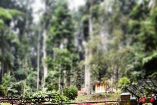 PUPR-LIPI bersinergi tata kawasan kebun raya Nusantara