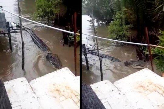 BKSDA:Warga Kotim jangan membuang bangkai binatang ke sungai