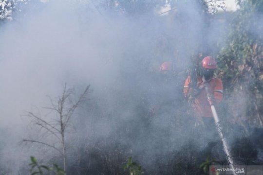 Belasan hektare lahan gambut pinggiran Kota Pekanbaru terbakar