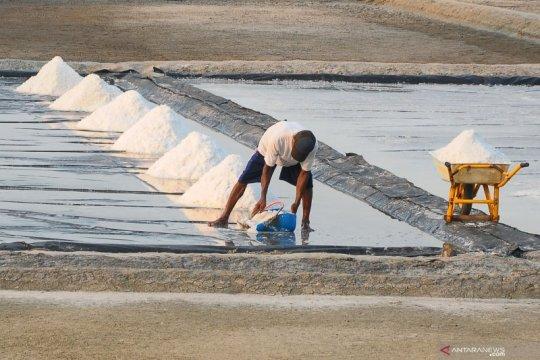Kurangi impor dengan perbaiki kualitas stok garam