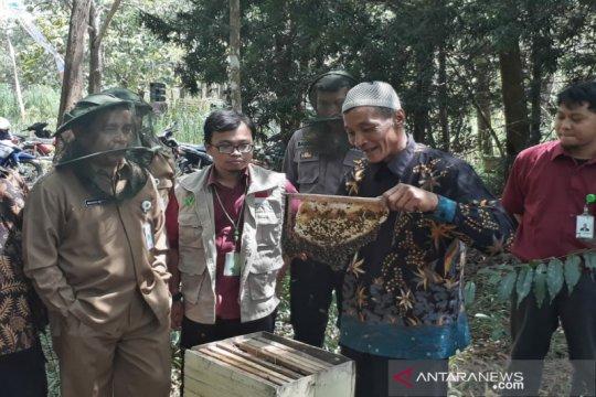 Permintaan madu tinggi, peternak budi daya lebah di Hutan Banaran