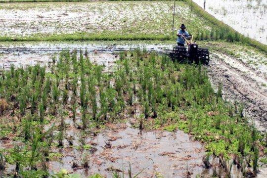 Peneliti apresiasi modernisasi alat pertanian untuk ketahanan pangan