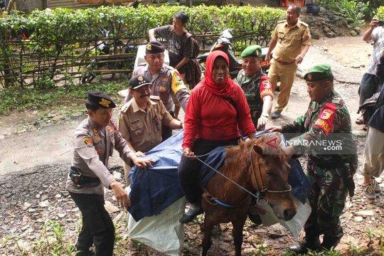 Distribusi logistik pemilu gunakan kuda di Jember