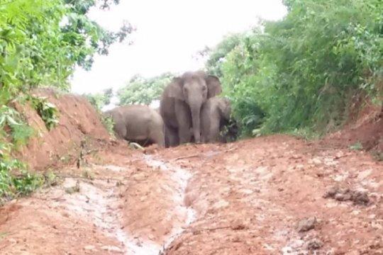 Meminimalkan konflik di hutan lindung TNBBS